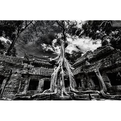 Ta Prohm Temple Cambodia -Amazing Places