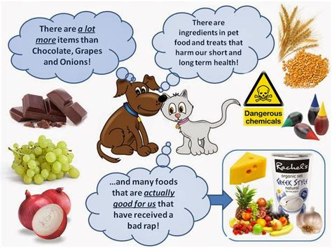 harmful beneficial foods  dogs cats ottawa dog