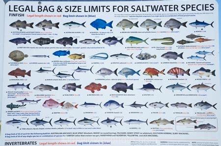 western australian fish species list