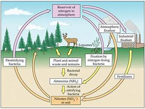 Carbon Cycle Steps Diagram