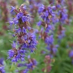 Welche Pflanzen Passen Gut Zu Hortensien : mein bienengarten welche pflanzen sind gut f r bienen stadtbienen ~ Heinz-duthel.com Haus und Dekorationen