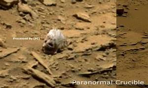 Pretty sure this skull found on Mars is that of an alien ...