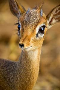 Cute Baby Deer Pictures, Photos, and Images for Facebook, Tumblr, Pinterest, and Twitter