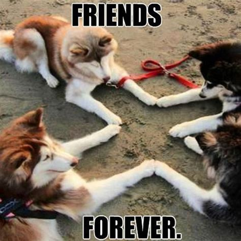 Bff Memes - best friend memes to keep your friendship strong