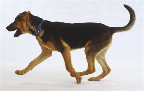 What A Dog's Tail Is Telling You