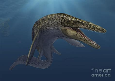 mosasaurus pictures facts dinosaur