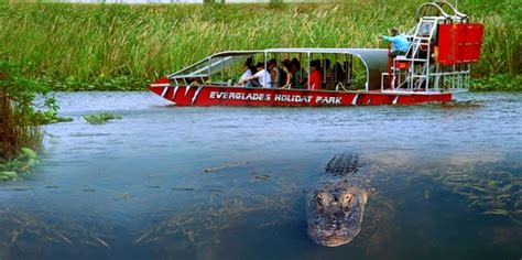 Everglades Airboat Tours South Florida by You Considered An Everglades Eco Tour