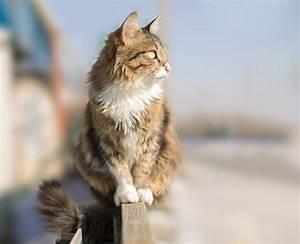 Comment Enlever Les Oeufs De Puces Sur Un Chat : comment savoir si mon chat a des puces wikichat ~ Dode.kayakingforconservation.com Idées de Décoration