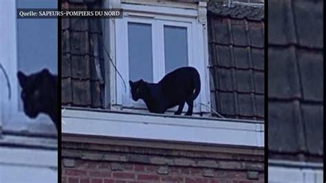 Gesundheitsminister jens spahn und sein ehemann daniel funke: Katze macht Sachen: Schwarzer Panther streift über die ...