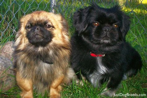 Dogs That Shed The Least by Very Large Dog Breeds Dog Breeds Picture