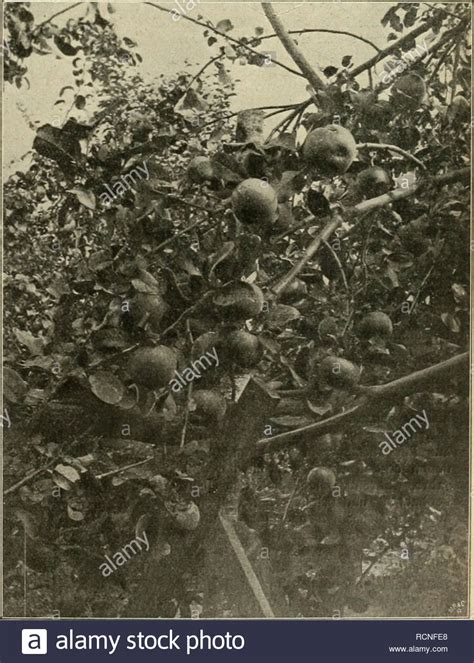 kokoserde für welche pflanzen apfel sorten stock photos apfel sorten stock images alamy