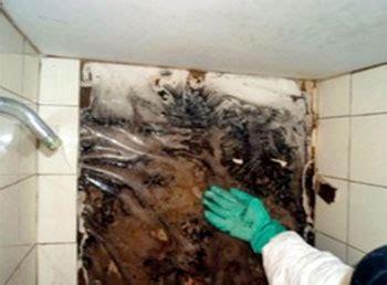 mold on shower walls mold shower walls