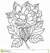 Peony Coloring Adults Vector Drawn Artwork Hand Illustration Bohemia sketch template
