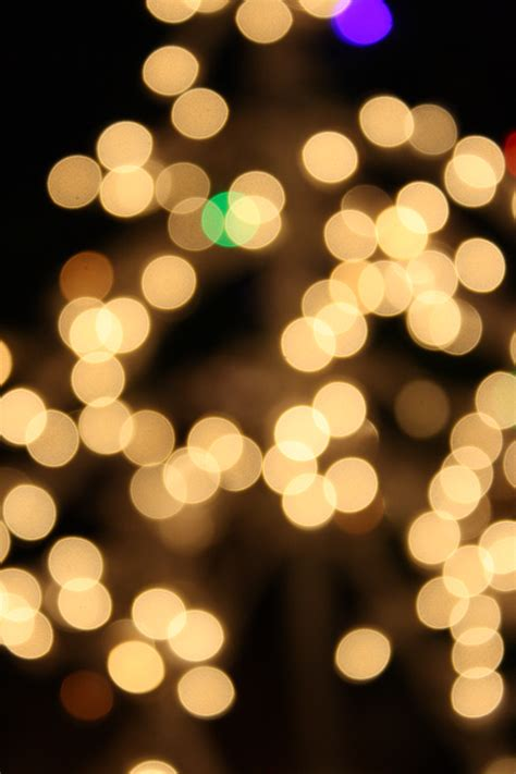 white christmas lights picture free photograph photos