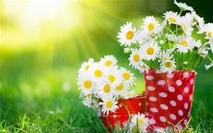 Best Beautiful Flowers Wallpapers In Hd Wallpaper Top Most ...