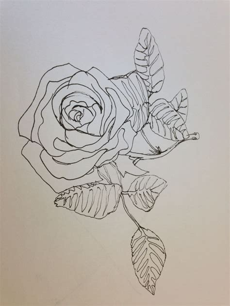 rose continuous  drawing sharpie sketch