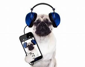 puppy with headphones wallpaper