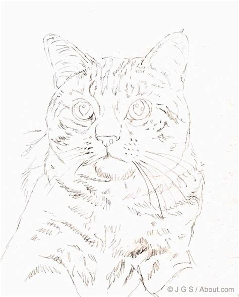 ideas  cat drawing tutorial  pinterest