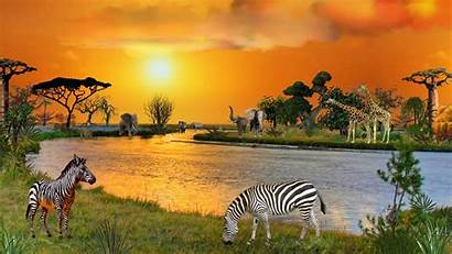 African Animals Wallpapers River Nature Sunset Rivers