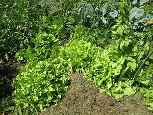 Salat Pflanzen Abstand : unser garten verschiedenes ~ Markanthonyermac.com Haus und Dekorationen