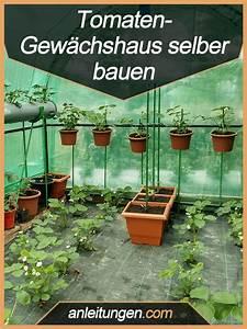 Tomaten Rankhilfe Selber Bauen : tomaten gew chshaus selber bauen tomaten z chtet man am besten in einem kleinen gew chshaus ~ A.2002-acura-tl-radio.info Haus und Dekorationen