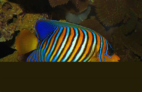 30 most threatened aquarium fish page for the fishes