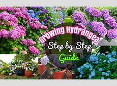 DIY Growing Hydrangeas #4 How to grow Hydrangea Tutorial