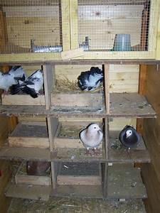 Nid Pour Poulailler : petite voli re pour pigeons pour le bien ~ Premium-room.com Idées de Décoration