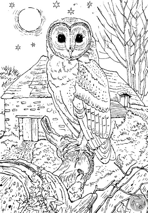 barn owl colouring page  barn owl trust
