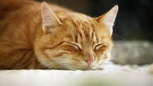 Wie Fange Ich Eine Katze : wie eine katze w rmer zu erkennen ~ Markanthonyermac.com Haus und Dekorationen