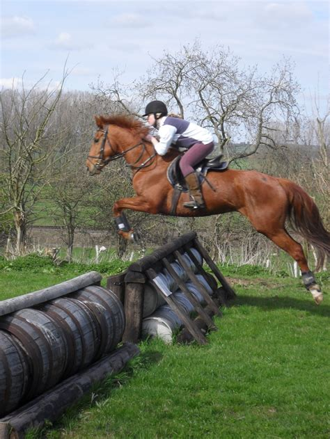 chestnut thoroughbred horse horses mare jumping perfect could stallion horsedeals tack racehorse