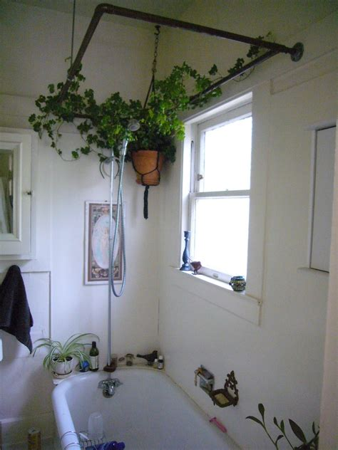 Best Plant For Bathroom Australia by Bathroom Plants Learn About The Best Plants For A Bathroom