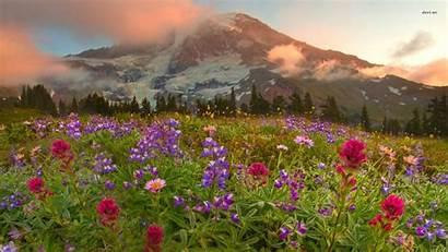 Wild Flowers Wallpapers Wildflowers