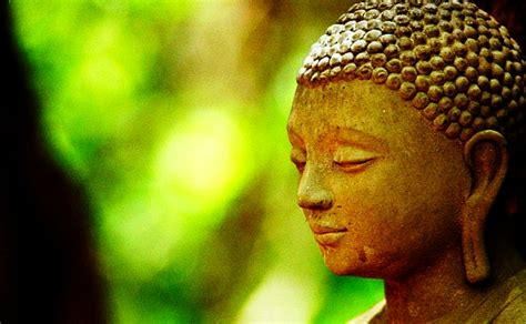 Drop Of Dhamma Delight