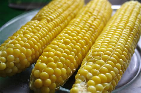 steam corn adorkable recipes steamed corn on the cob