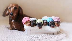 6 newborn puppies fetch smiles in photo shoot with mom ...