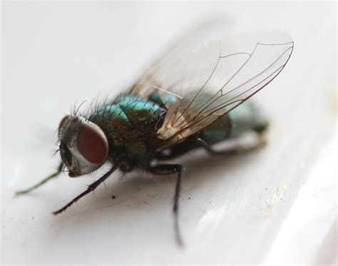 prevent flies  entering  home