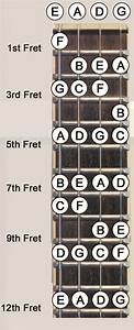 Bass Guitars  U2013 Mdwsupport Com