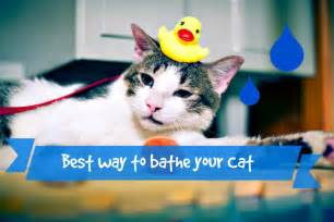 how to bathe a cat what is the best way to bathe a cat fluffy kitty