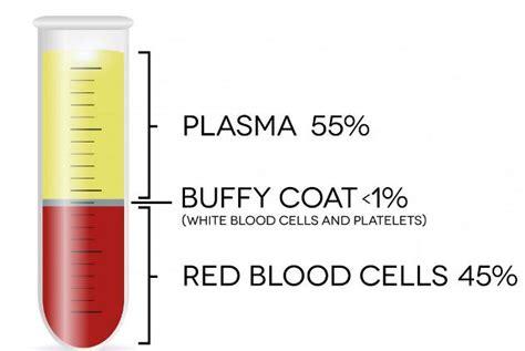 Blood Test Sed Rate Medifit Biologicals Esr