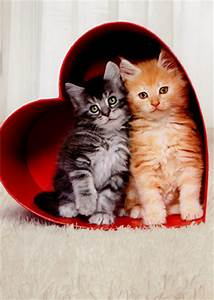 Two Kittens In Heart Box Cat Valentines Day Card ...