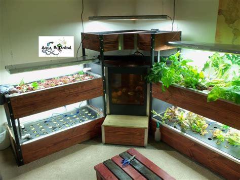 indoor aquaponics  aqua botanical growbox