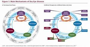 Keratitis Eye Diseases