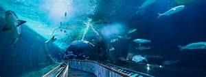 Aquarium of the Bay Tickets - San Francisco, CA