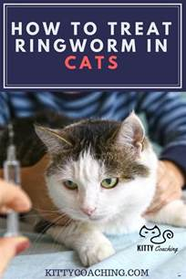 how to get rid of worms in cats how to get rid of ringworm in cats cats kittens