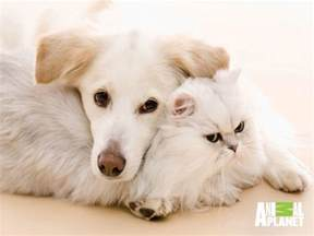 dogs and cats cats and dogs wallpapers wallpaper cave