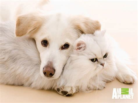Cats And Dogs Wallpapers  Wallpaper Cave