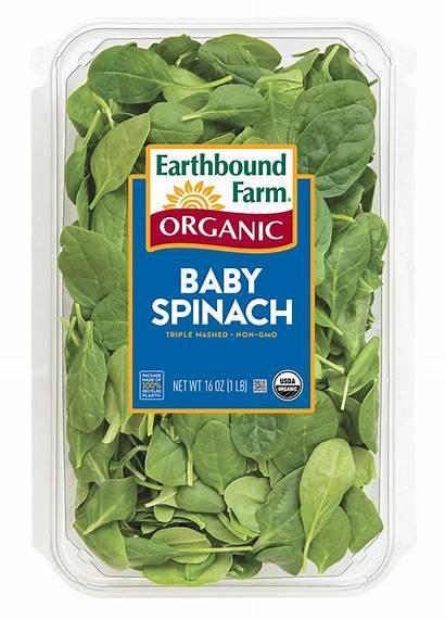 Spinach Organic 5oz Fresh Earthbound Farm Clamshell
