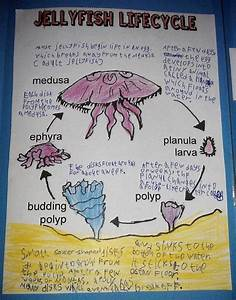 Jellyfish Lapbook And Unit Study