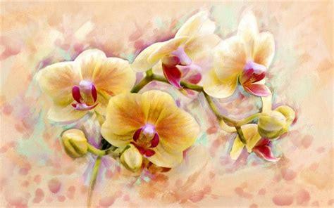 arri鑽e plan bureau hd télécharger fonds d 39 écran orange orchidées orchidée de fleurs d 39 arrière plan pour le bureau libre photos de bureau libre